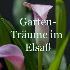 Gartenträume im Elsass: Foto Rainer Sturm stormpic.de