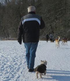 Alter Mann auf Hundespaziergang mit West Highland White Terrier