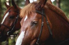 Конкурс; конная фотосессия; фотосъемка с лошадьми.