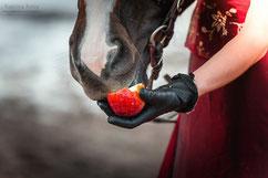 Фотосессии с лошадьми; Аренда лошадей для фотосъемки