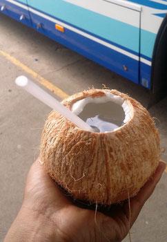 Frisches Kokoswasser direkt aus der Kokosnuss