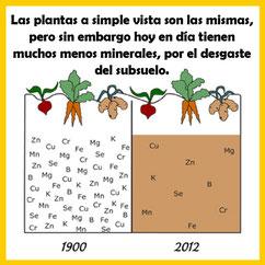 Hortalizas con menos minerales que antes Nutrición Ortomolecular Herbolario Alquimista Arrecife Lanzarote