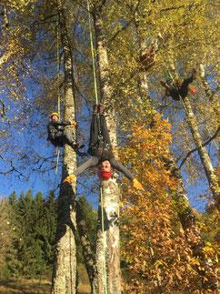 Bild: Baumklettern Erlebnis Baum
