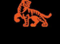 Tigress-yoga: Die Symbiose aus Yoga und Kung Fu. Der kraftvolle Power Vinyasa Yoga. Zürich Oerlikon