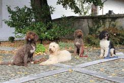 Ela Ri Tango Flint warten schön obwohl ganz viele Hunde herumstehen