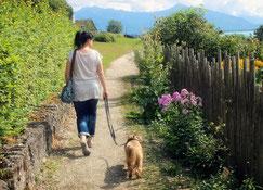 Junge Frau auf Hundespaziergang mit Spaniel