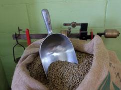 Kaffee, holzgerösteter Kaffee, Kaffee in Trebur kaufen, Kaffeebohnen in trebur kaufen, Kaffee gross gerau, Kaffee rüsselsheim, italiensicher Kaffee, Kaffee aus Brasilien, Kaffee trinken trebur
