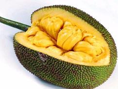 Woher kommt Jackfruit, Exotisches Jackfruit Liquid