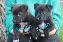 Aragon und Kurco