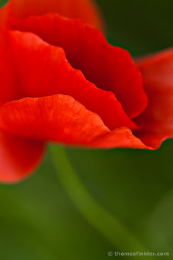 Thomas Finkler Photography, fine art nature photography, poppy blossom, macro photography, abstract, colorful, summer