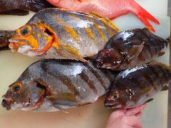 タカノハダイの寿司 デリバリー