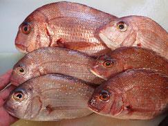 デリバリー 真鯛の寿司