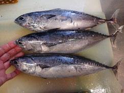 マルソウダの寿司 デリバリー