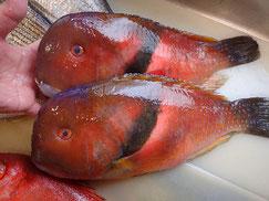 イラの寿司 デリバリー