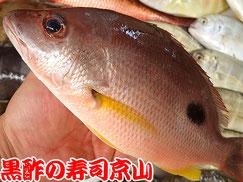 寿司 出前 江東区 夢の島