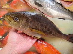 イサキの寿司 デリバリー