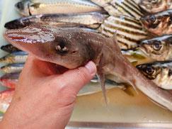 ホシザメの寿司 デリバリー