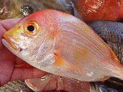連子鯛の寿司 デリバリー