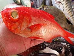 金目鯛の寿司 デリバリー