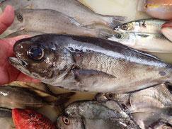 目鯛の寿司 デリバリー
