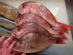 真鯛の寿司 デリバリー