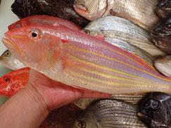 イトヨリ鯛の寿司 デリバリー
