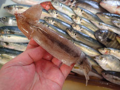 真イカの寿司 デリバリー