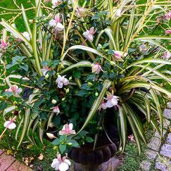 Ela Merz Florist Blumen Terrassen Gestaltung