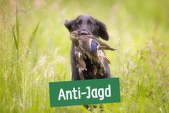 Hund auf Wiese mit Ente im Maul nach unerwünschter Jagd