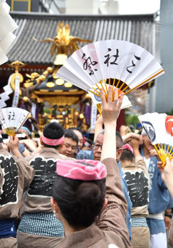 <三社祭> Snj19_032 ©️折野さん