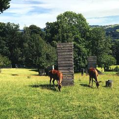 Hirsche sind nur ein paar der Tiere die man im Wildpark Peter und Paul in St. Gallen in der Ostschweiz entdecken kann.