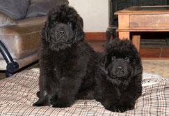 Victoria und ihr Bruder Van Morrison im Alter von 10 Wochen