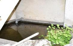 地上階の水槽