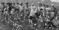 Esclaves et propriétaire dans un champ de coton