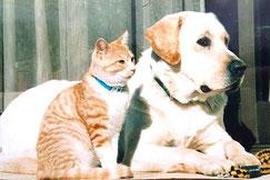 ペットを救う波動療法