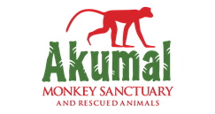 6 Awesome Eco-Adventure Parks in the Mayan Riviera - Akumal Monkey Park