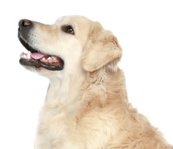 Hundeschule Bremen - Ihre Hundeschule MOMO - Training erwachsene Hunde