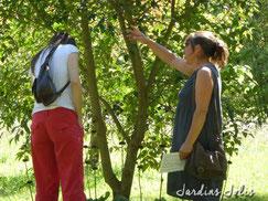 Conseil personnalisé en fleurissement de jardins