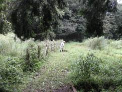 谷戸横断道周辺草刈り