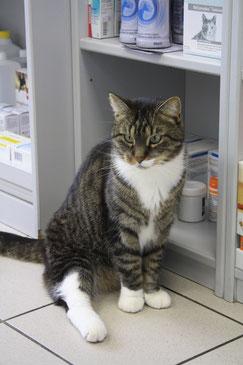 Schützen Sie Ihre Katze vor Parasiten durch eine gezielte Parasitenprophylaxe