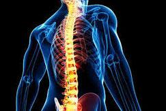 胸椎 姿勢 骨