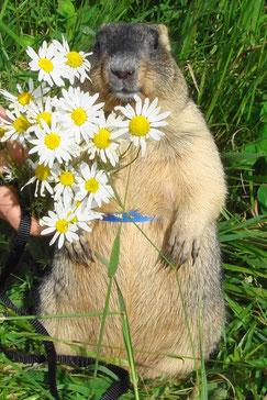 """АиФ.Европа"": И мой...??? со мною.Фото www.marmota.ru"