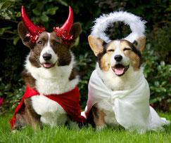 Photo portrait de deux chiens, l'un déguisé en ange, l'autre en démon avec un serre-tête à cornes rouges.