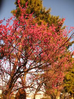 梅も咲き婚活花盛り!