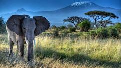 Kenya Vacanze