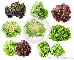 Come scegliere le varietà di insalate