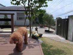 ポルフィード石、レンガ、雑草防止シート(ザバーン240)、高麗芝、施工例