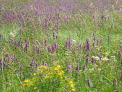 Orchideenwiese bei Weiherhaus (Foto: R. Zeiner)