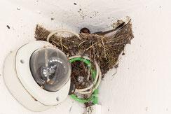 Kreativität beim Nestbau