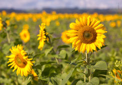 Glückwunsckarten, Fotokarten, Wasserfall, Entlebuch